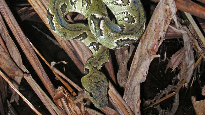 Nowa metoda złodziei - zastraszenie wężem