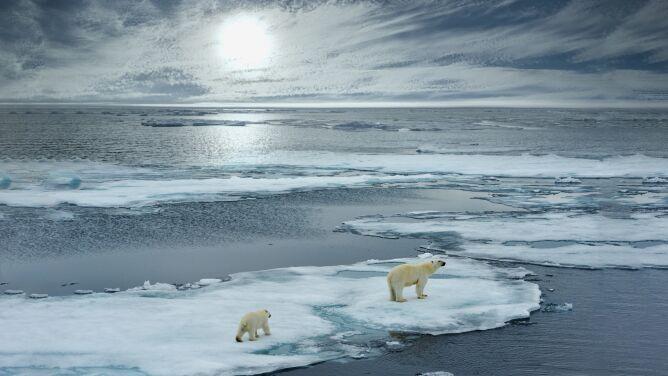 """Arktyka przestaje być taka, jaką znamy. <br />""""Skala zmian jest znaczna"""""""