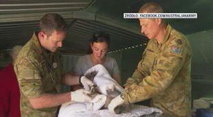 Żołnierze zaangażowali się w pomoc skrzywdzonym zwierzętom