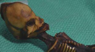 Tajemniczy szkielet Aty